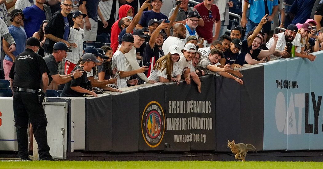 A Cat on the Discipline. A Mantis on a Hat. Monday Baseball Had It All.