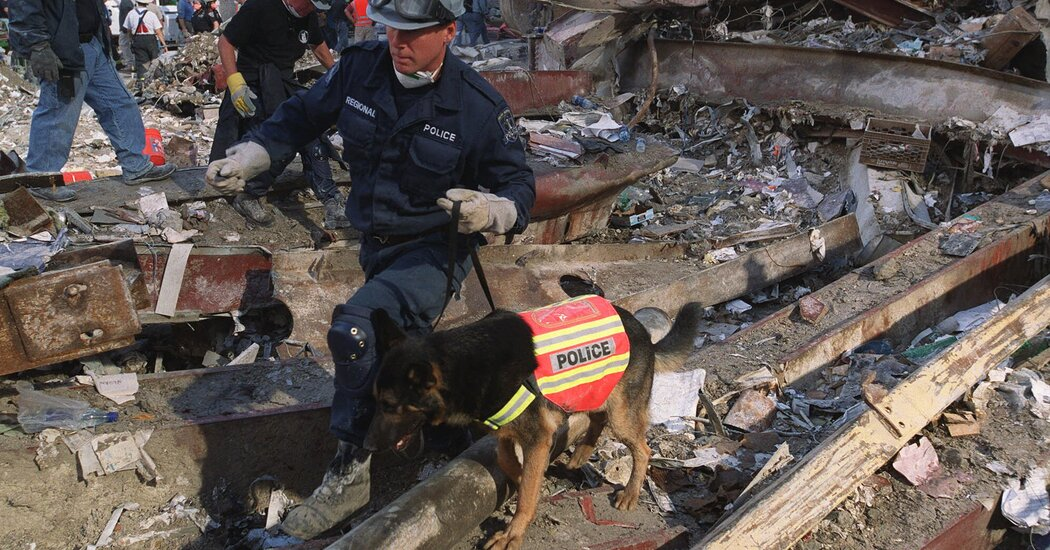 The Dogs of 9/11: Their Failed Searches for Life Helped Sustain It