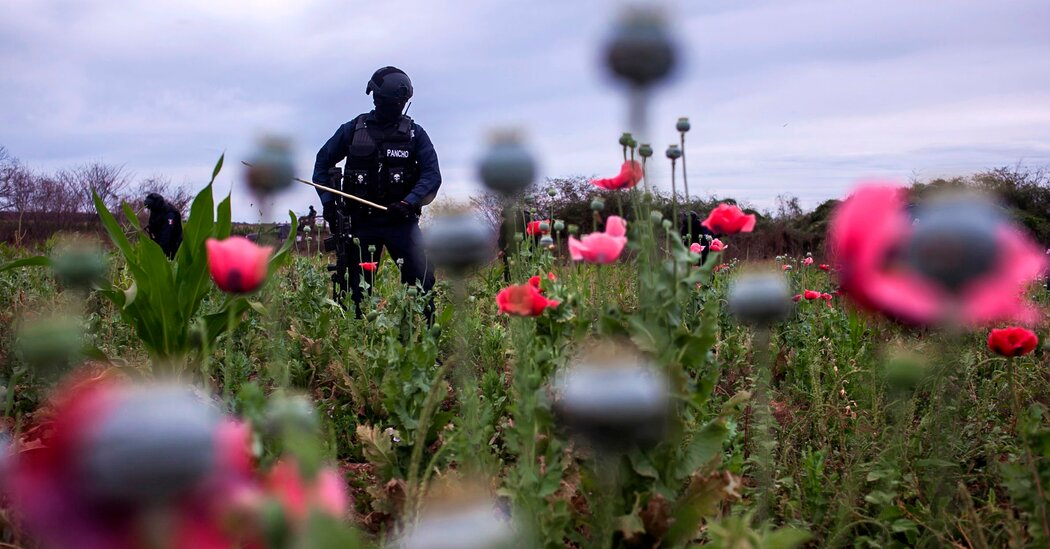 The Phony War on Drugs